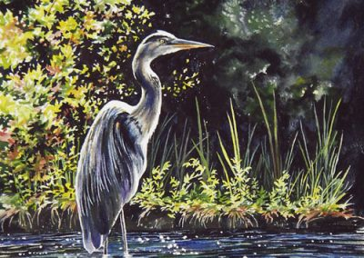 Great Blue Heron  –SOLD